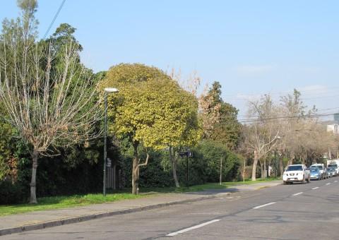 areas verdes vitacura