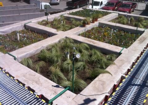 El Laboratorio de Infraestructura Vegetal (LIVE) de la UC es el primer laboratorio de I+D+i en Latinoamérica