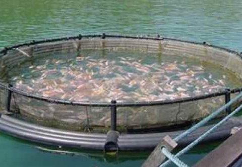 Crisis salmon